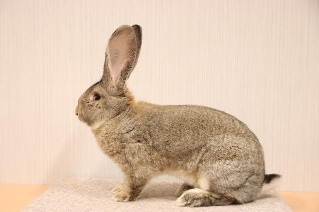 mooiste konijn